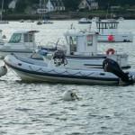 bateau_humber